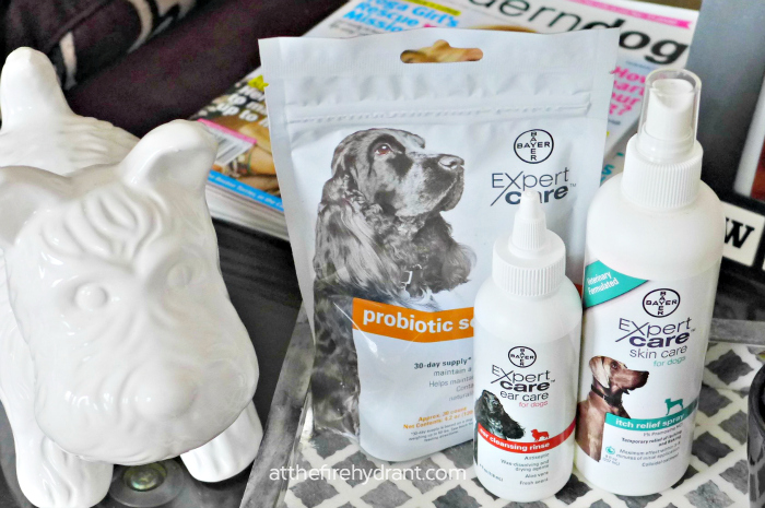 Maintain Your Dog's Healthy Digestion #BayerExpertCare - At