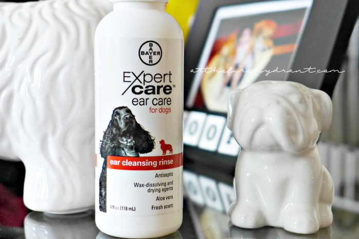 Squeaky Clean Ears for Brobee with #BayerExpertCare - At The
