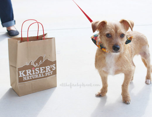 Toby's Day Out to Kriser's Natural Pet #KrisersHolisticHealth #HappyHealthyPets